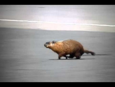 Groundhog Formula One