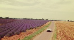 Purple fields of lavender and the Mercedes-Benz 300 SL Roadster – Infinite Spicy