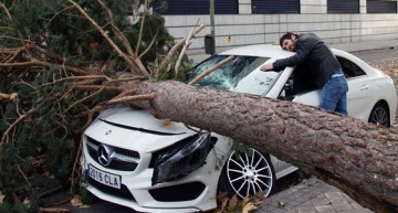 Simply hearbreaking! Mercedes smashed by falling tree in Spain