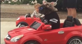 Viral video: Kid and dog drive mini-Mercedes cars