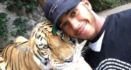 Lewis Hamilton scares the hell out of a tiger