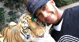 He never learns – Lewis Hamilton thinks tiger is a lap cat