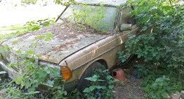 The greenest diesel: Barn find Mercedes W 123 grows a tree, still works
