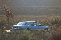 The Safari Mercedes: Looking for the Summer