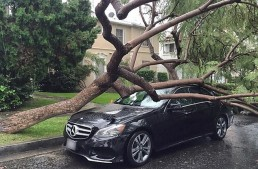 """The Weather Had """"Cruel Intentions"""" on a Mercedes"""