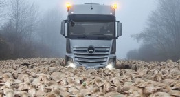 Power meets Stubbornness: Actros SLT stopped by Sheep