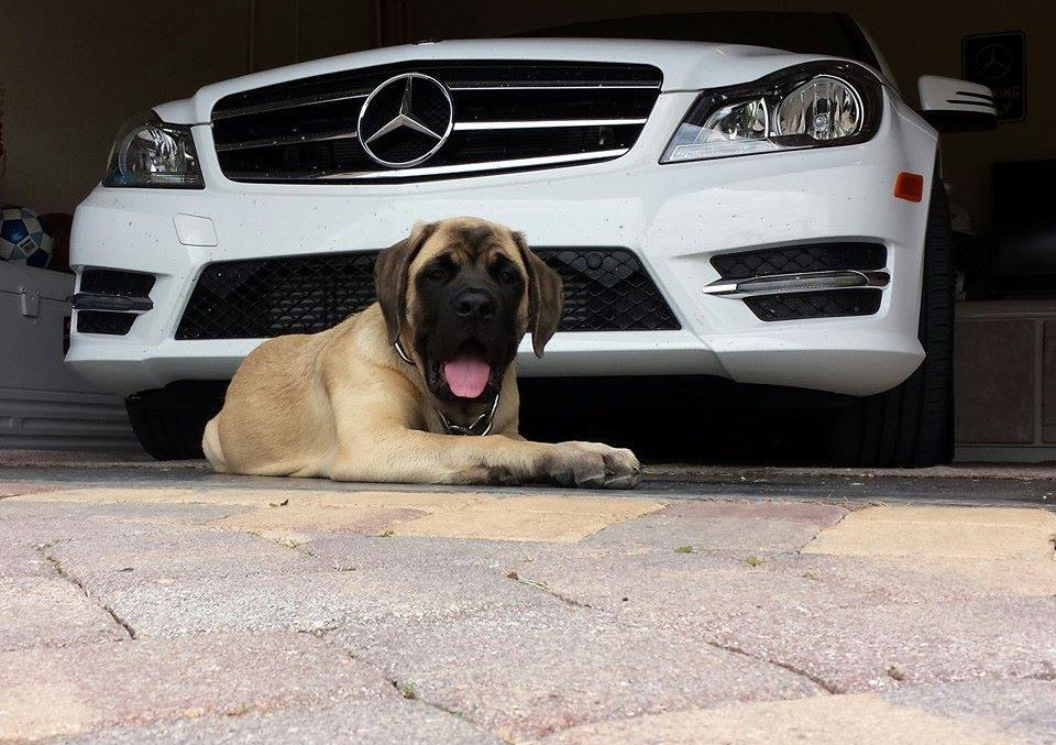 Mercedes-Benz National Puppy Day: My co-driver is barking!