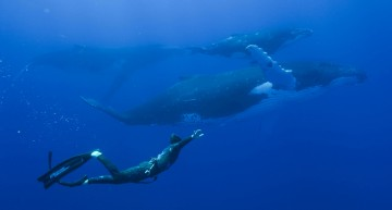 The Mercedes-Benz Adventure – Up close and personal with the whales