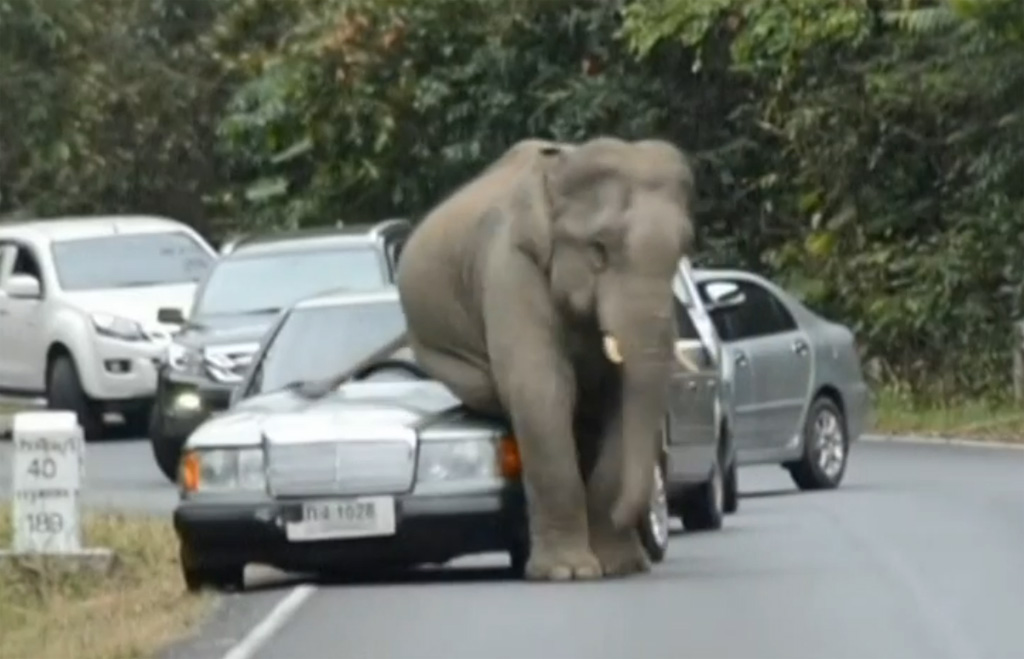 Watch out for elephants! Giant creature destroys a Mercedes!