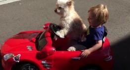 Cute dog drives little boy in Mercedes SLS supercar. Hilarious video