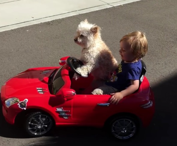 Cute dog drives little boy in Mercedes SLS supercar. Hilarious video