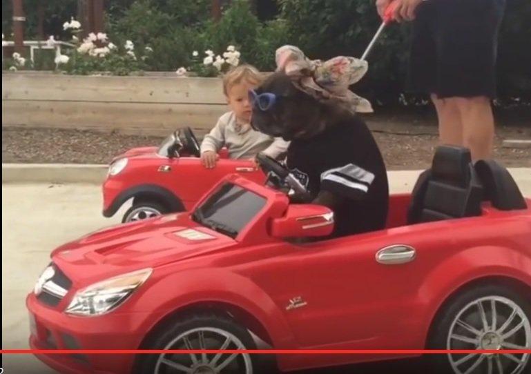 Viral video: Kid and dog drive mini-Mercedes cars
