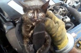 The meowing mechanic – Cat saved from the engine of a Mercedes