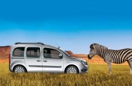 Baby zebra Citan meets Mercedes-Benz Citan in the wild